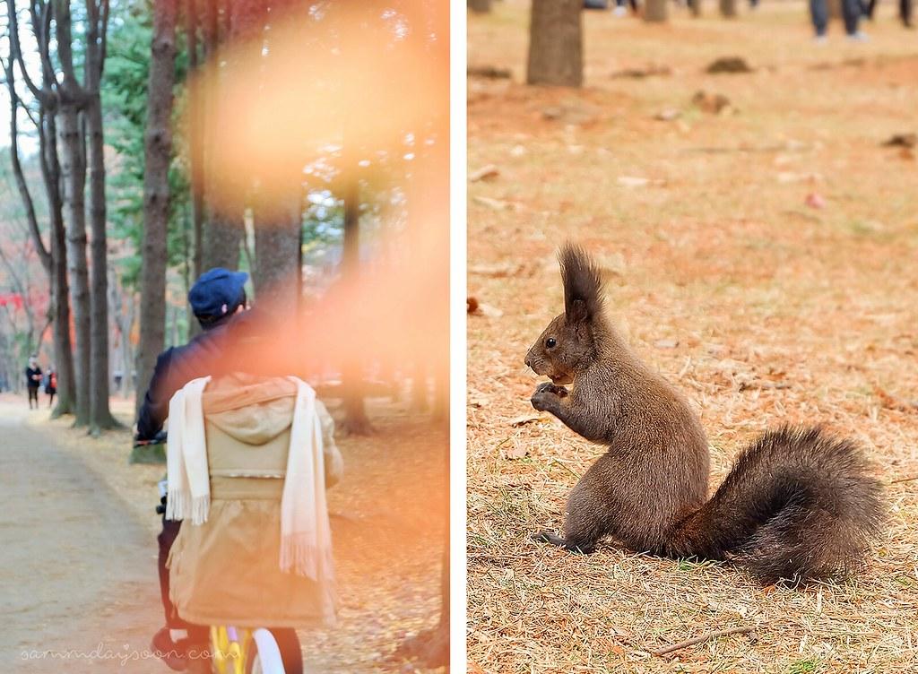squirrel_nami_island
