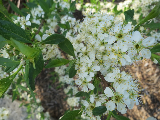 medicine garden, may 15th, Canon POWERSHOT S200