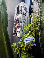 #213 Plants and graffiti