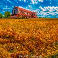 The Wheat Season