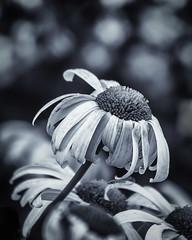 Riga Flowers-6