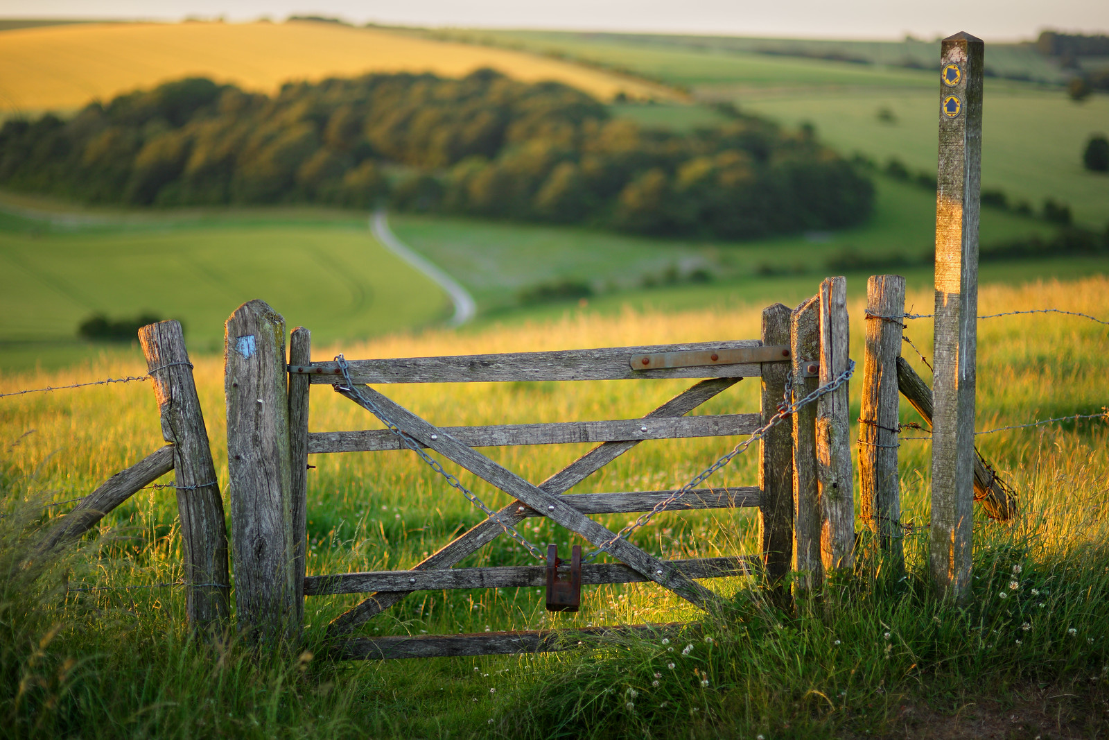 South Downs Gate - 85mm f1.4