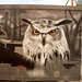 Qubek Owl