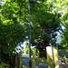 Lamppost on Curzon Park North, 2018 Jul 08