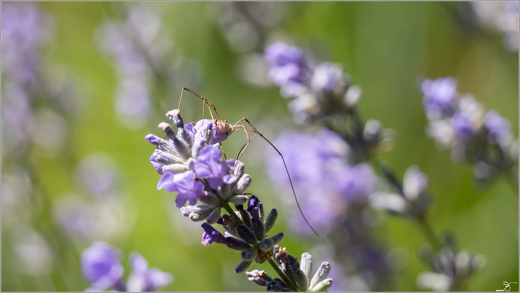 Jardin botanique Saverne: Rampants et fleurs 28221735517_4f8971a7bf_b