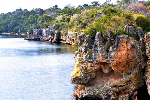 Blackwall Reach cliffs, June 2013