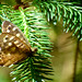Barley, Aitken Wood - Pendle Sculpture Park, speckled wood butterfly