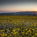 Dawn and the Wild Flower meadow at Stogumber by Robin M Morrison