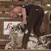 Sheep Sheering - Eventual Open Championship Winner, David Buicke - Great Yorkshire Show