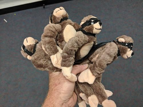 Monkeys before flying