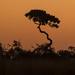 Botswana Sky by mclcbooks