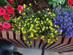Flowers - Storgata Askim_2695