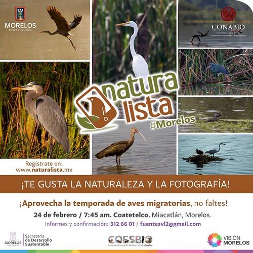 Naturalista - Coatetelco
