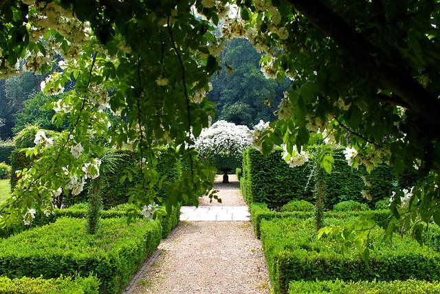 roses and green garden Mondo Verde