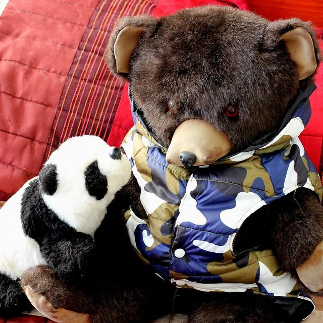 Panda and Camo Bear