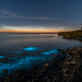 'Bioluminescence, beneath Noctilucence' - Anglesey by Kristofer Williams