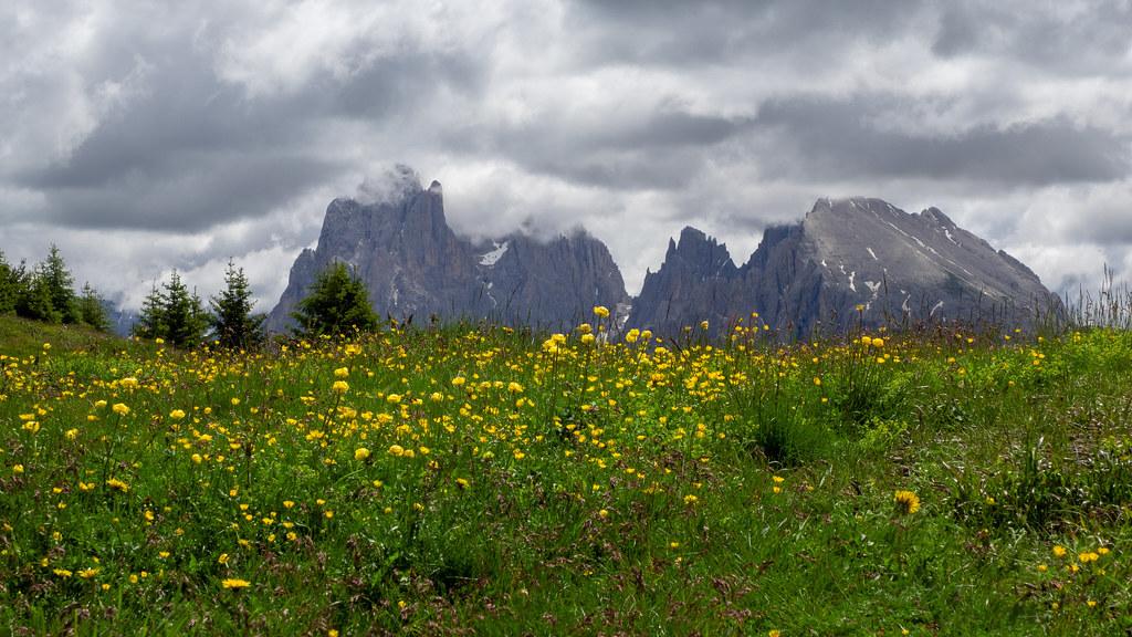 Alpine meadow - Trollius europaeus