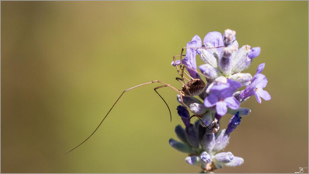 Jardin botanique Saverne: Rampants et fleurs 43091095051_16d39f4365_b