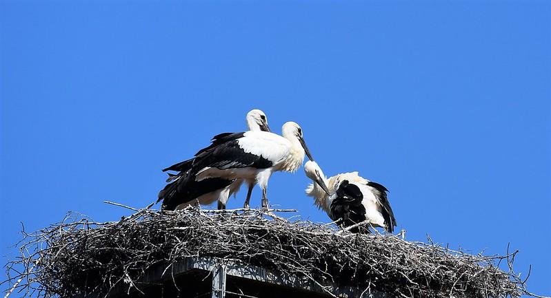 Storks 30.06 (14)