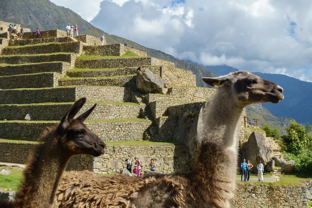 Machu Picchu-05564