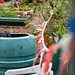 Scotland's Gardens Craigintinney Telferton July 2018 -27