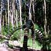 Barley, Aitken Wood - Pendle Sculpture Park. (7)