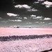 Prairie meets sky