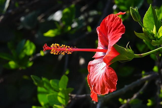 Flower (Macro), Sony ILCE-7M2, Sony FE 70-200mm F4 G OSS