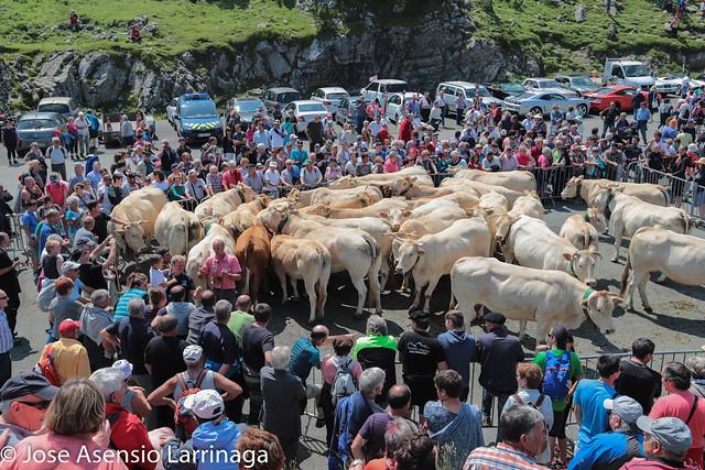 Tributo de las Tres Vacas , 2018 Isaba #DePaseoConLarri #Flickr -20