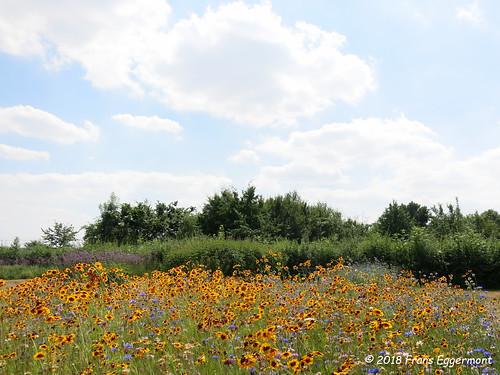 IMG_2219 - Vlindertuin Vichte - Butterfly Garden