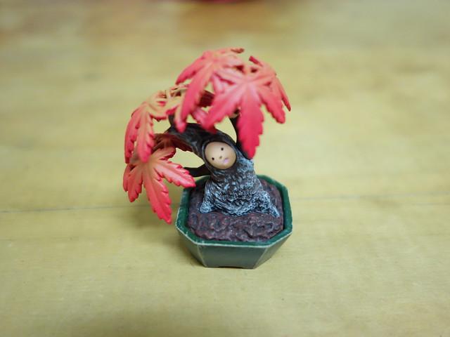準備送給強者我醫師的盆惱山紅葉(雞爪槭)