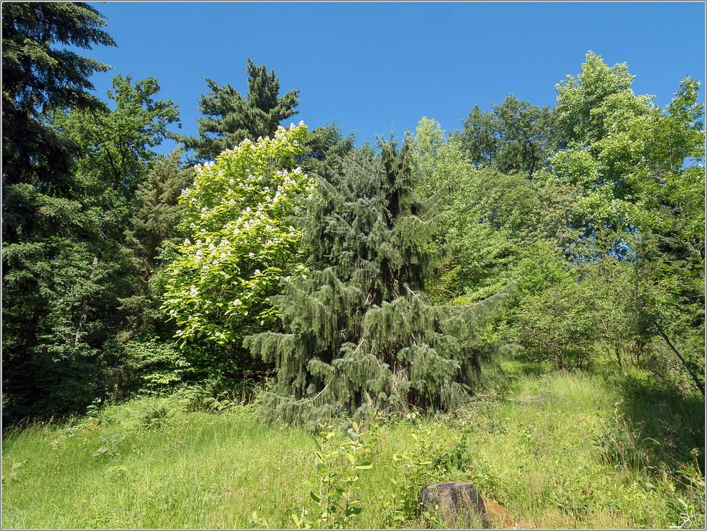 Jardin botanique Saverne: le jardin 42372043414_cc58a89e45_b