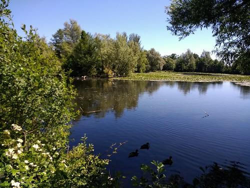 #Stephenstown pond #Knockbridge