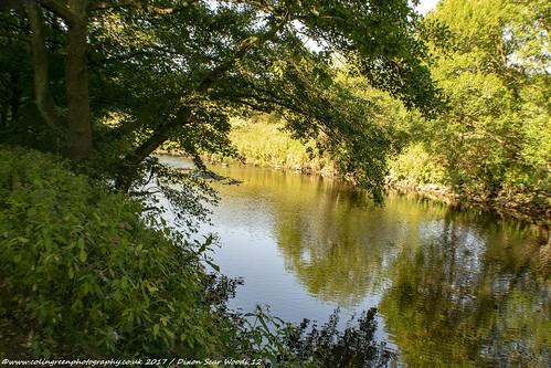 River Calder at Dixie Woods.