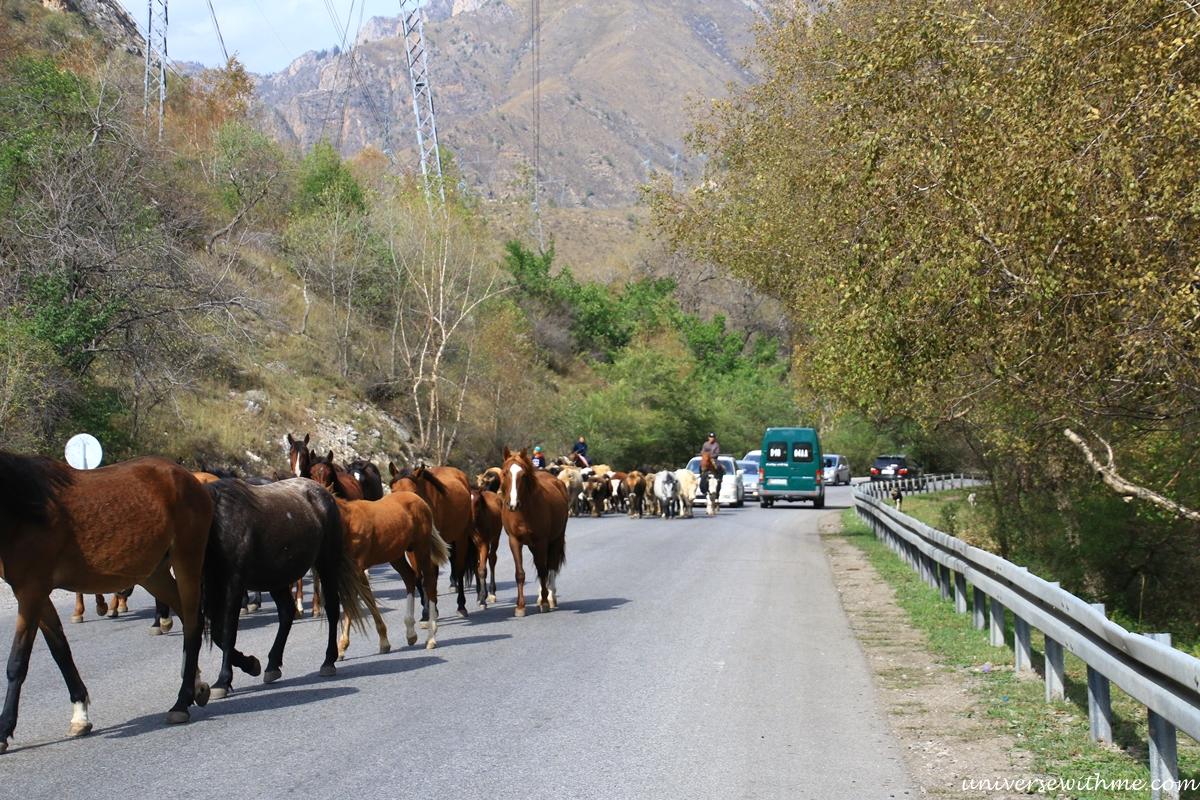 Kyrgyzstan travel_303