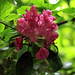 Leicester Botanical Gardens June 18