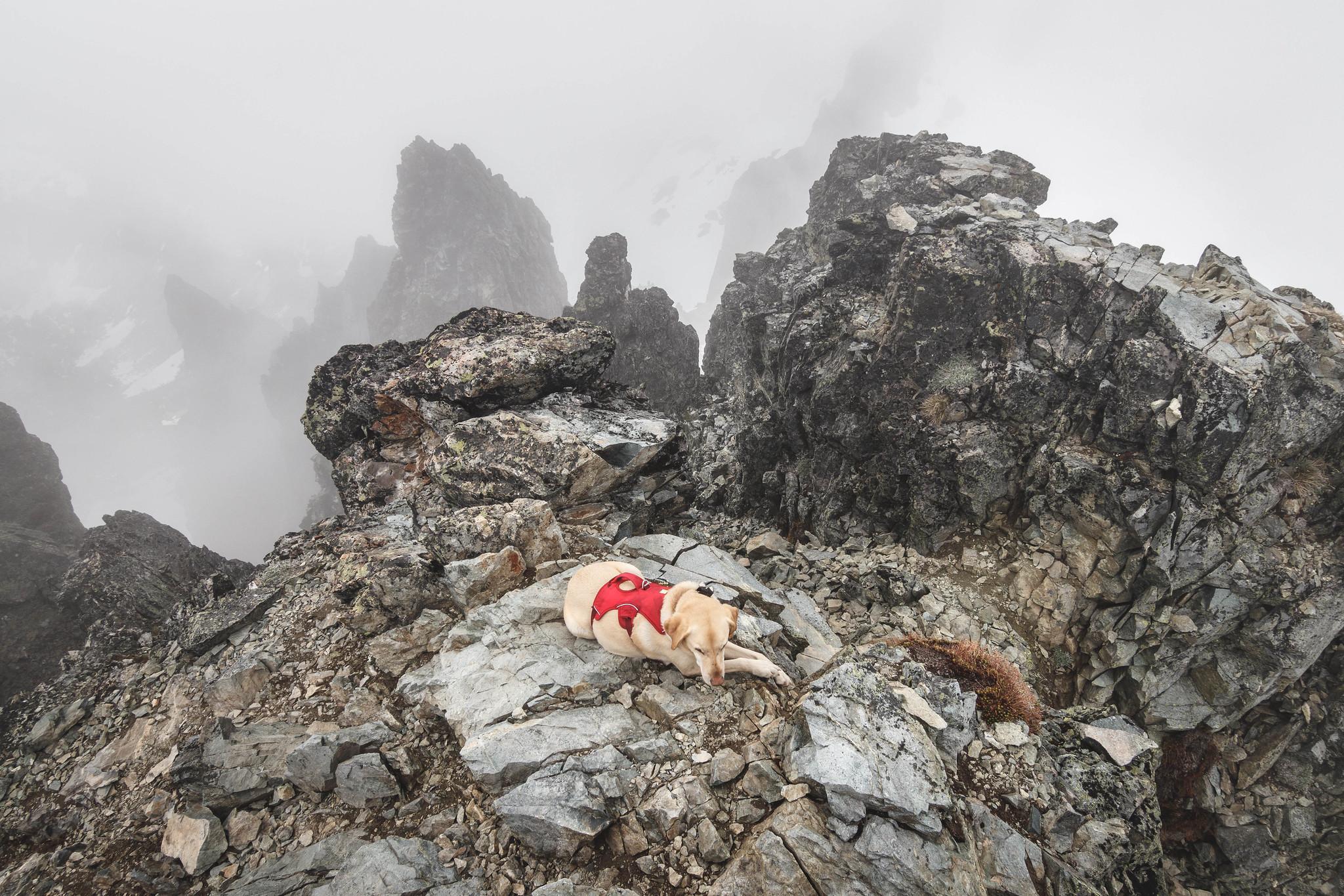 Summit dogs on Mount Daniel Main Summit