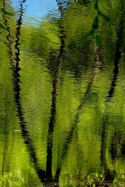 pond fantasy