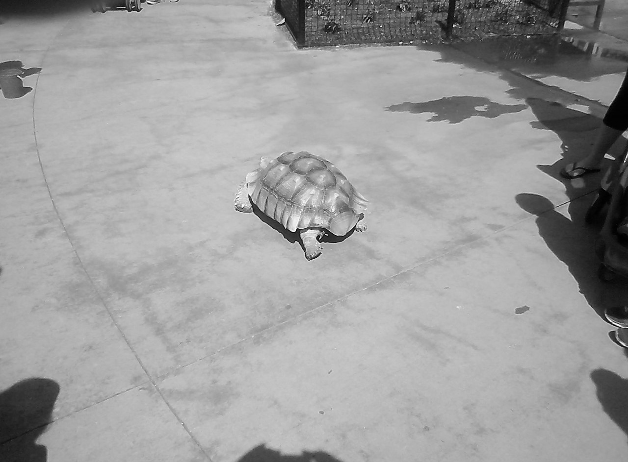 Columbus Zoo BW 5-31-2014 4-11-52 PM