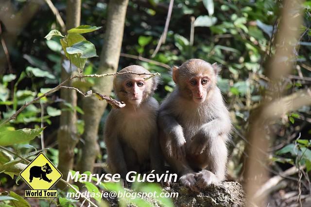 Parc des Macaques Kaohsiung, Taiwan
