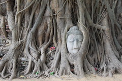 Thailand 2013 - 4.Tag, Ayutthaya, Phitsanuloke, Sukothai