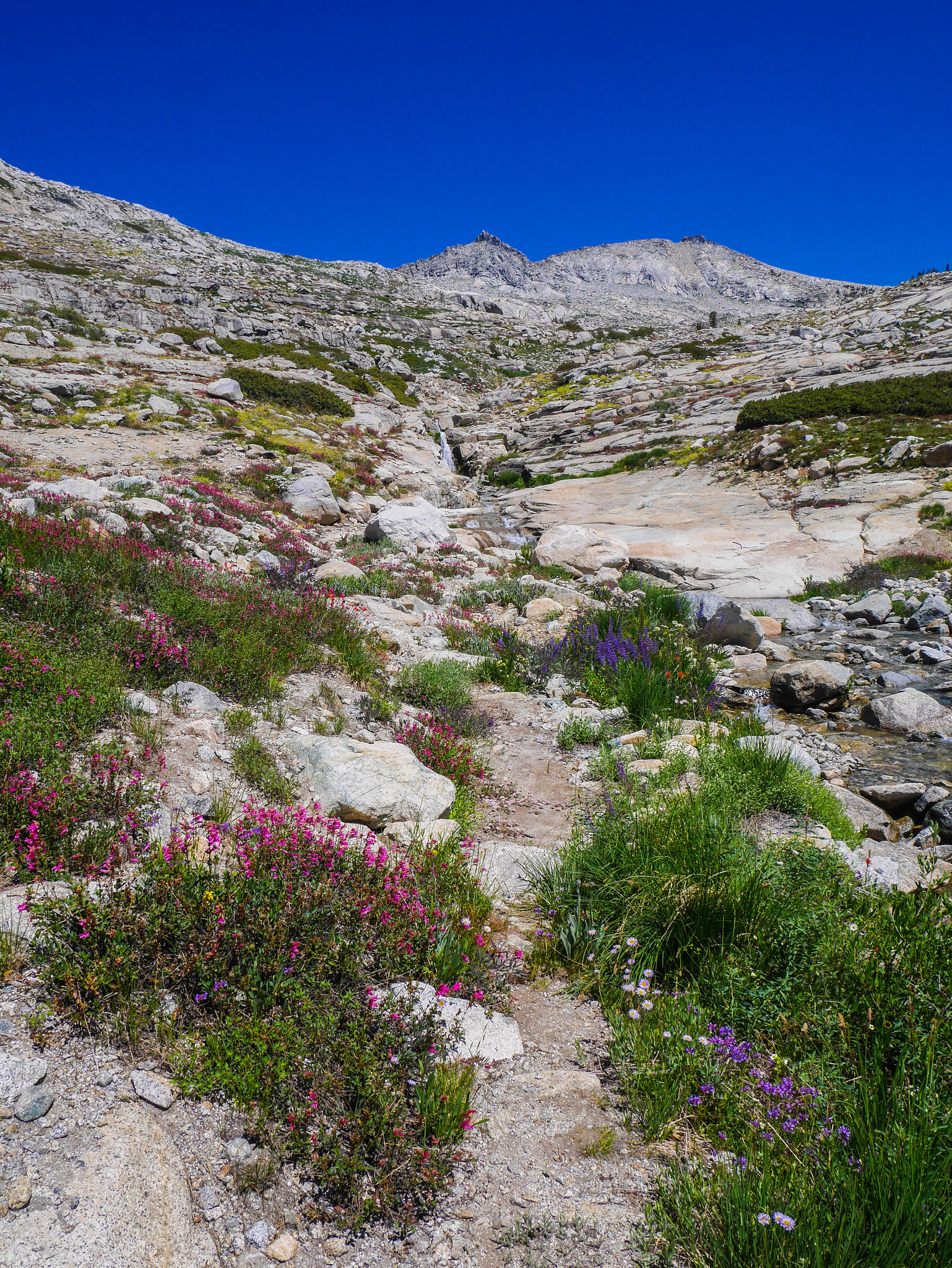 Flower gardens where Elizabeth Pass trail crosses Lonely Lake outlet