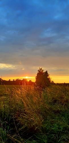 Beautiful Sunset 😀  #sunset #sun #benheinephotography #nature #rochefort #benheine #sky #ciel #trees #forest #foret #photo #photographie #arbres  #coucherdesoleil #evening #samsungs9