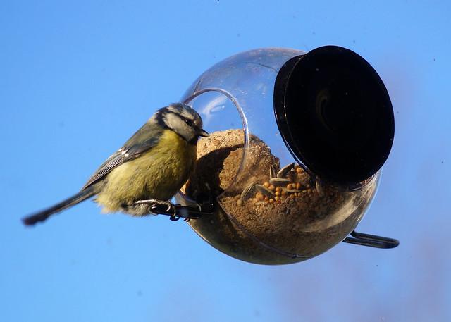 birdfeederC09055