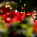 Red Berries Delight