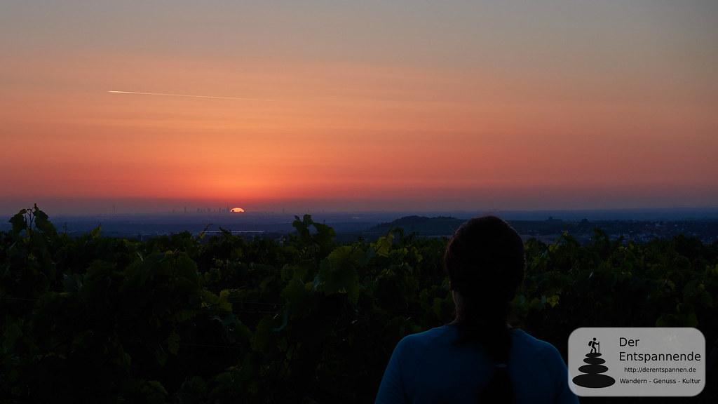 Sonnenaufgang über Weinbergen und Frankfurt
