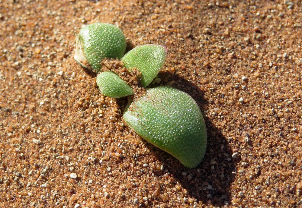little-plant-sand-dune