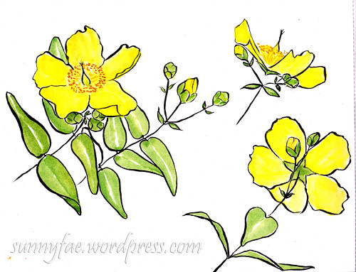 sketch of yellow flowers