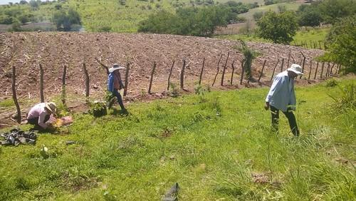 Reforestación - Ixtlilco el Grande (13/07/2018)