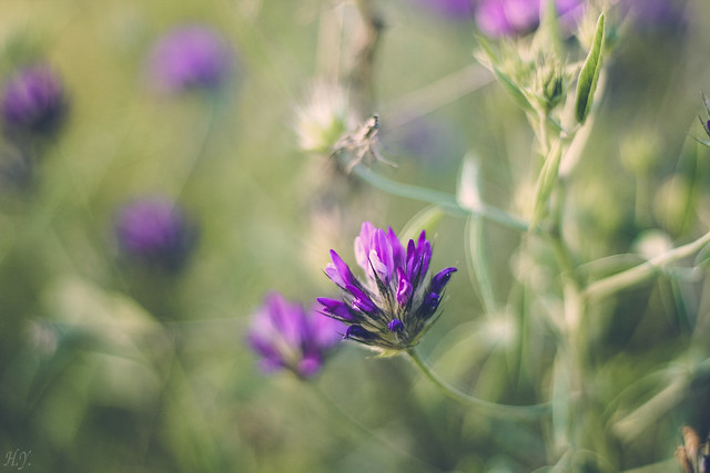 Purple summer flowers...